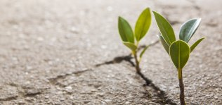 Hope - plant growing in cement.jpg